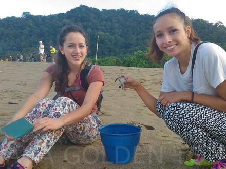 image-sukomade-turtle-beach2-java-golden-tour