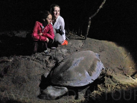 image-turtle-laying-eggs-sukomade-java-golden-tour