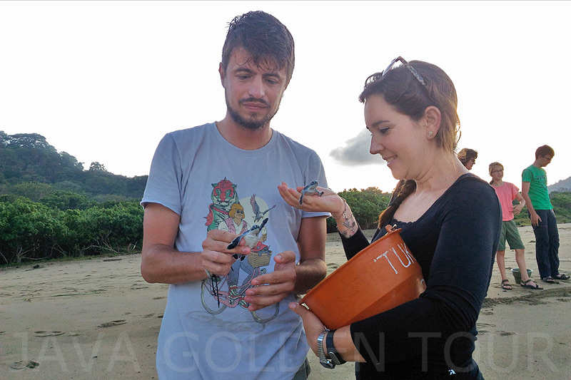 image-sukomade-turtle-beach1-java-golden-tour